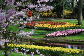 Keukenhof Flower Gardens in Lisse, The Netherlands