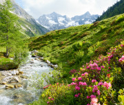 Wildbach im frühlingshaften Hochgebirge mit Alpenrosen im Vordergrund
